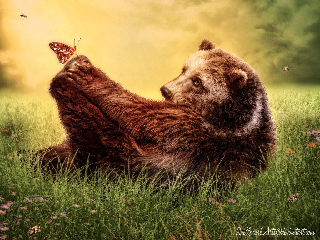Медведь фото и открытки