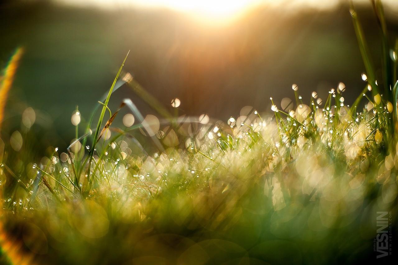 картинки весна утро красота брат, поздравляю тебя