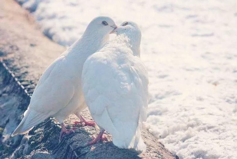 Скачать mp3 бесплатно бедные голуби