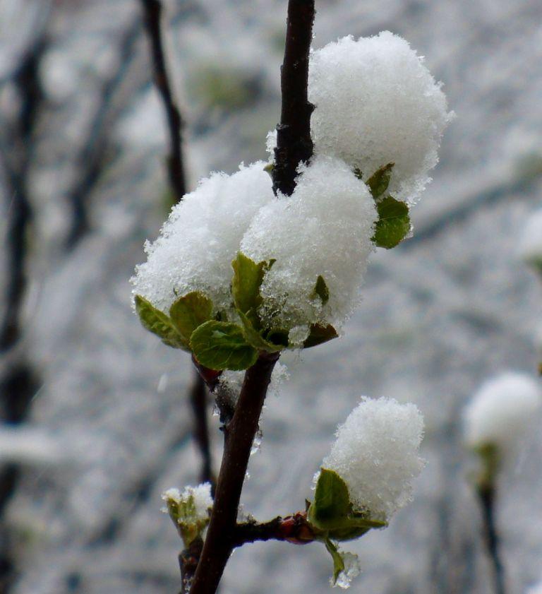 картинка апрель снег явных