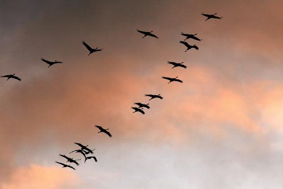 Скачать песню журавлик по небу летит