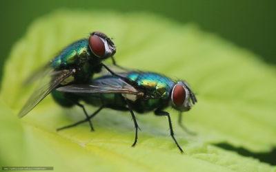 На фото:  Мудрец и мухи, автор: zakko2009