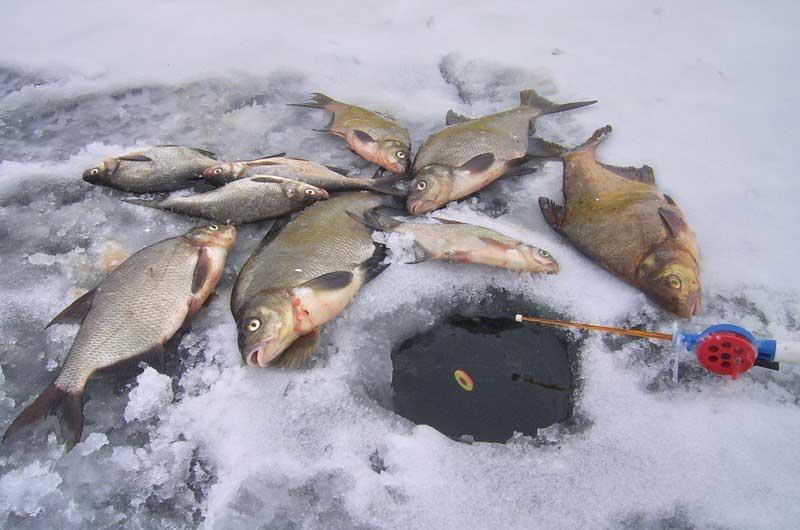 поплавочная рыбалка в марте