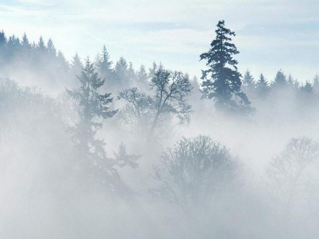 Фотография в туман, самого тумана или даже дымки может оказаться очень капризной