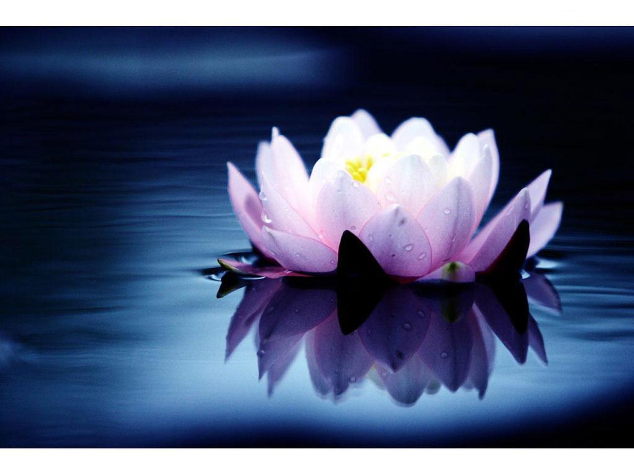Стих цветет таинственная роза мироздания