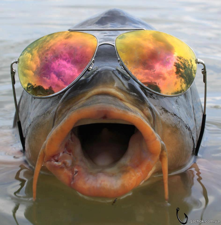 аватарки про рыбаков
