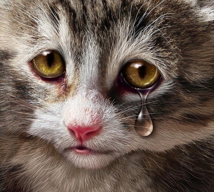просто картинка грустного котенка красивая легенда