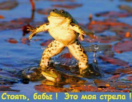 мужик на лягушке к деньгам