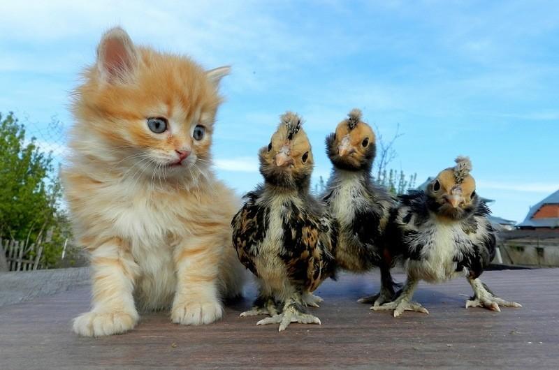 Утро, картинки приколы с котами и котятами
