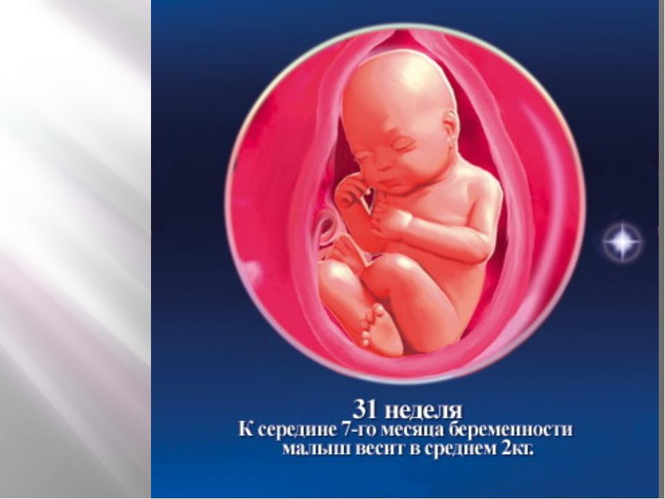 Беременность по неделям развитие плода с 17
