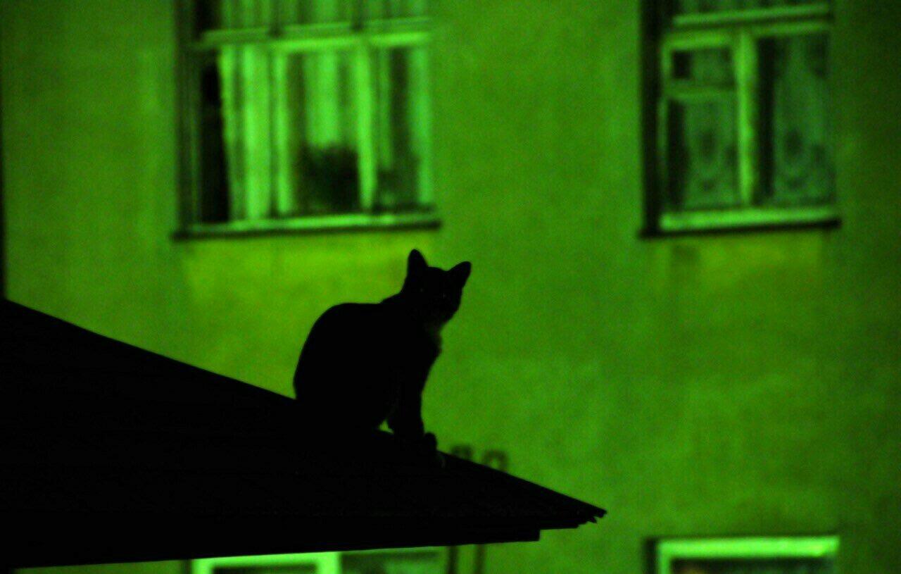 Обои рабочего стола кот на крыше
