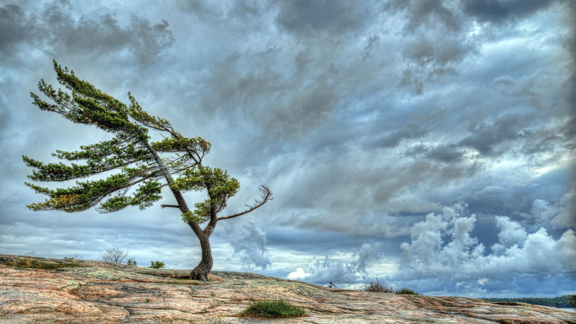 лучшие картинки ветер