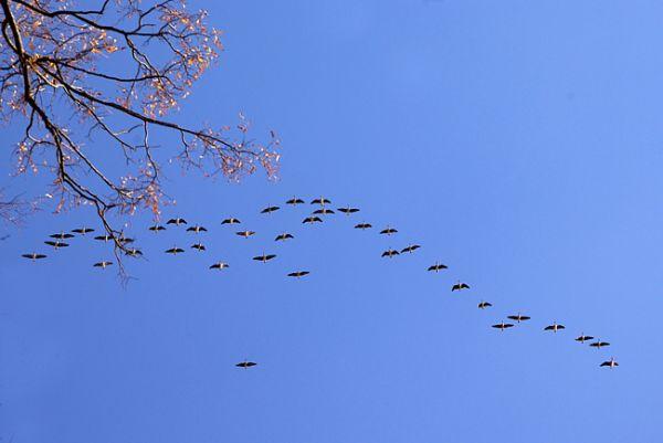 к чему снятся стая птиц залетевшая домой большая
