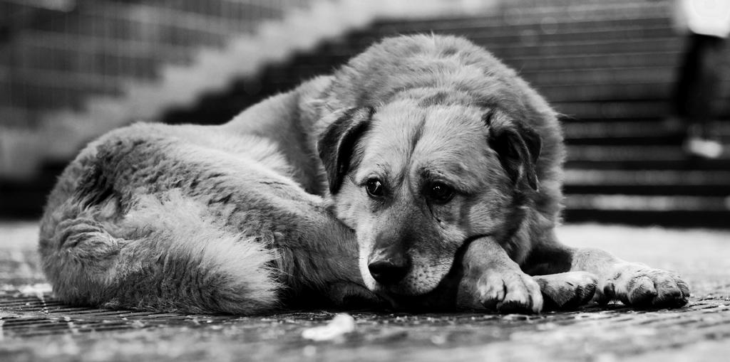 недавно грустные картинки бездомных животных до слез подарочные коробки
