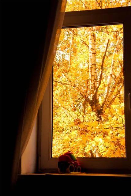 Осеннее окно стих