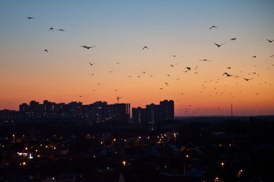 много птиц собирается на крышах могут быть