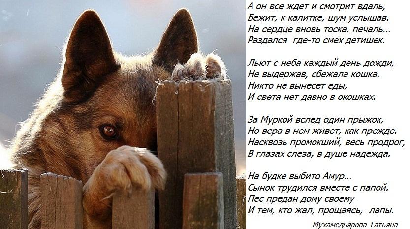 Днем рождения, открытки про собак со стихами