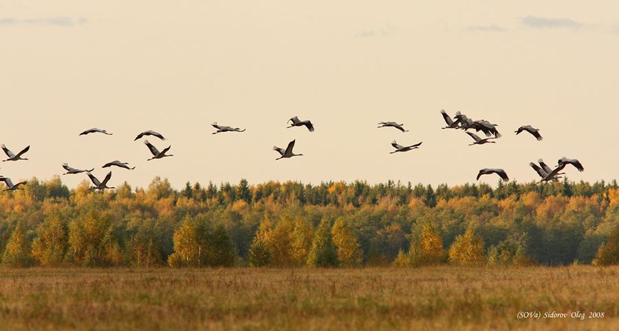 нашим отлет птиц в картинках смог всех