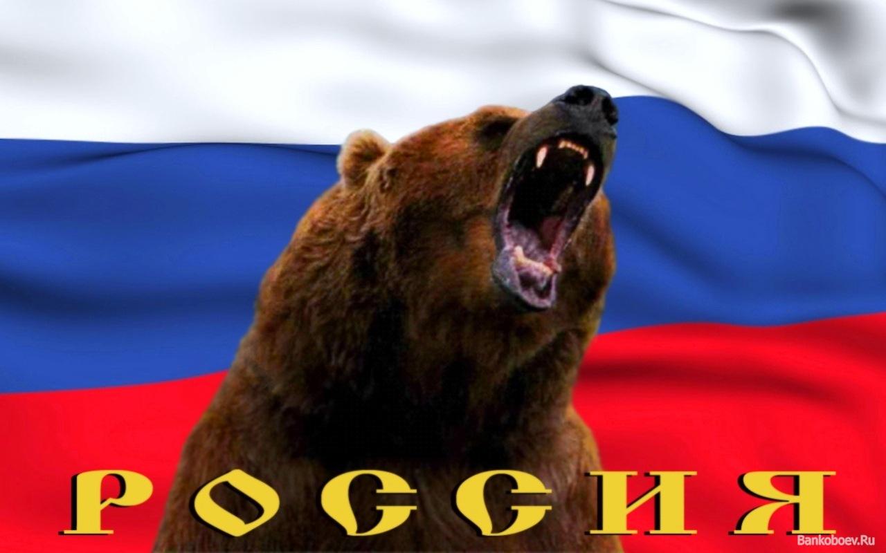 Картинки медведя с российским флагом