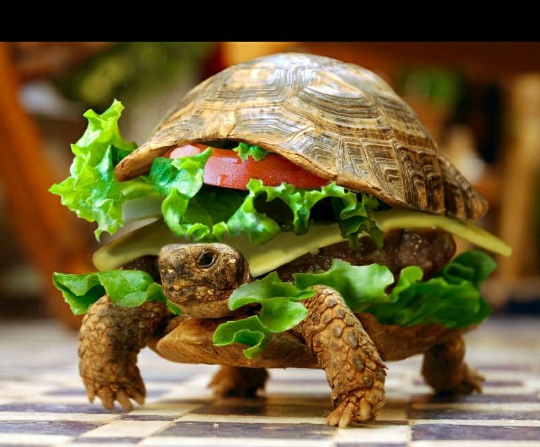 Картинки черепах смешные