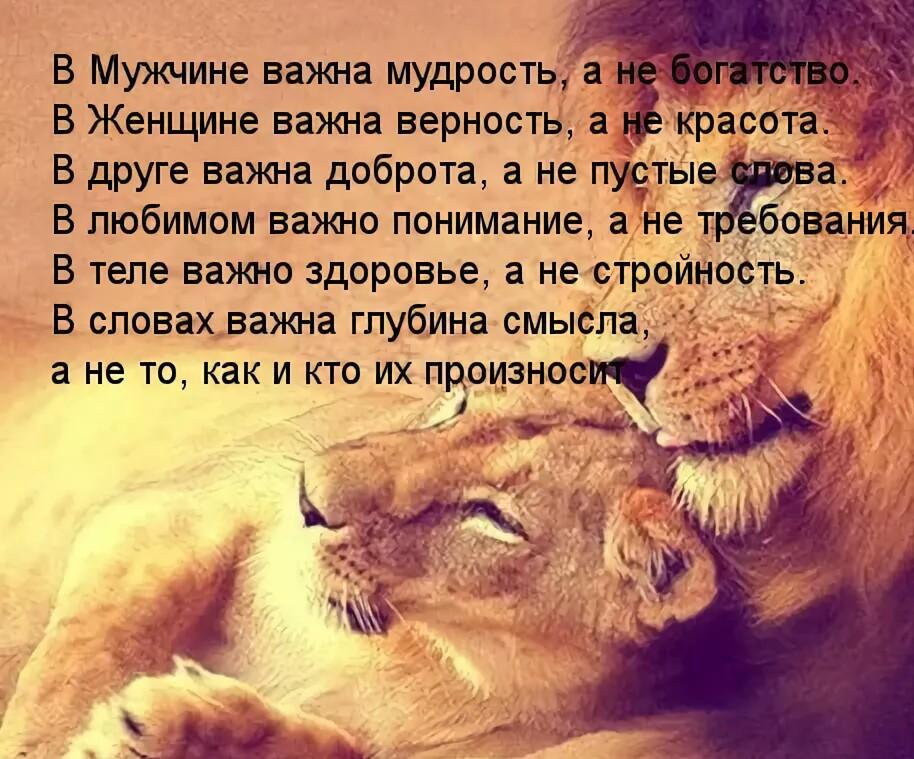 Картинки со смыслом жизни с надписями чтоб сердцу затронуло со львами