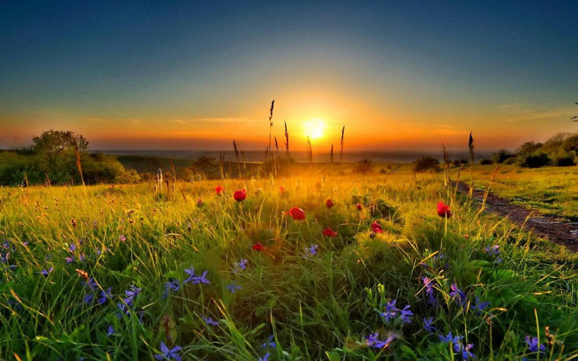 мнится восход солнца в поле фото видов