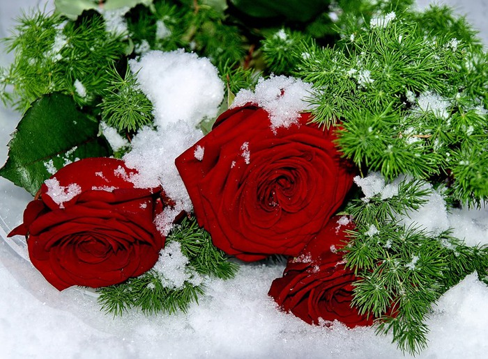 Зимняя открытка с цветами, смешные