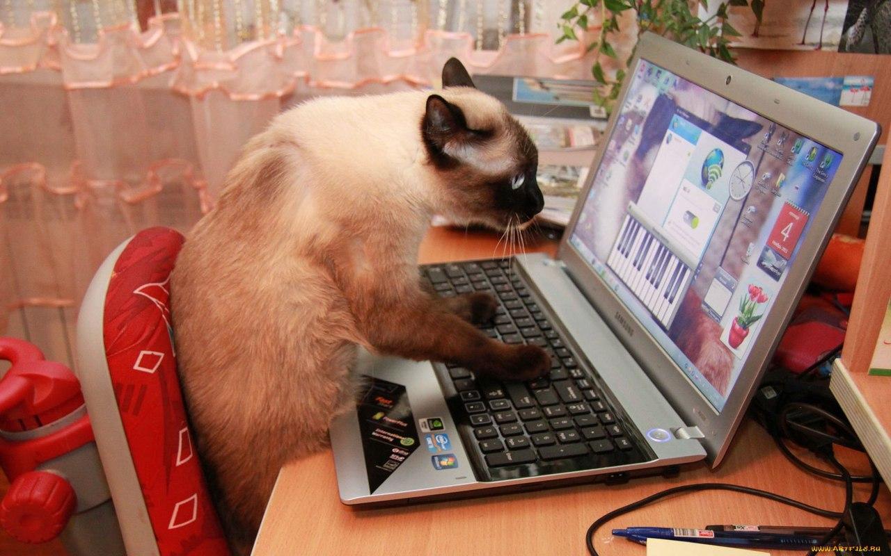 Дружба это, прикольная картинка с ноутбуком