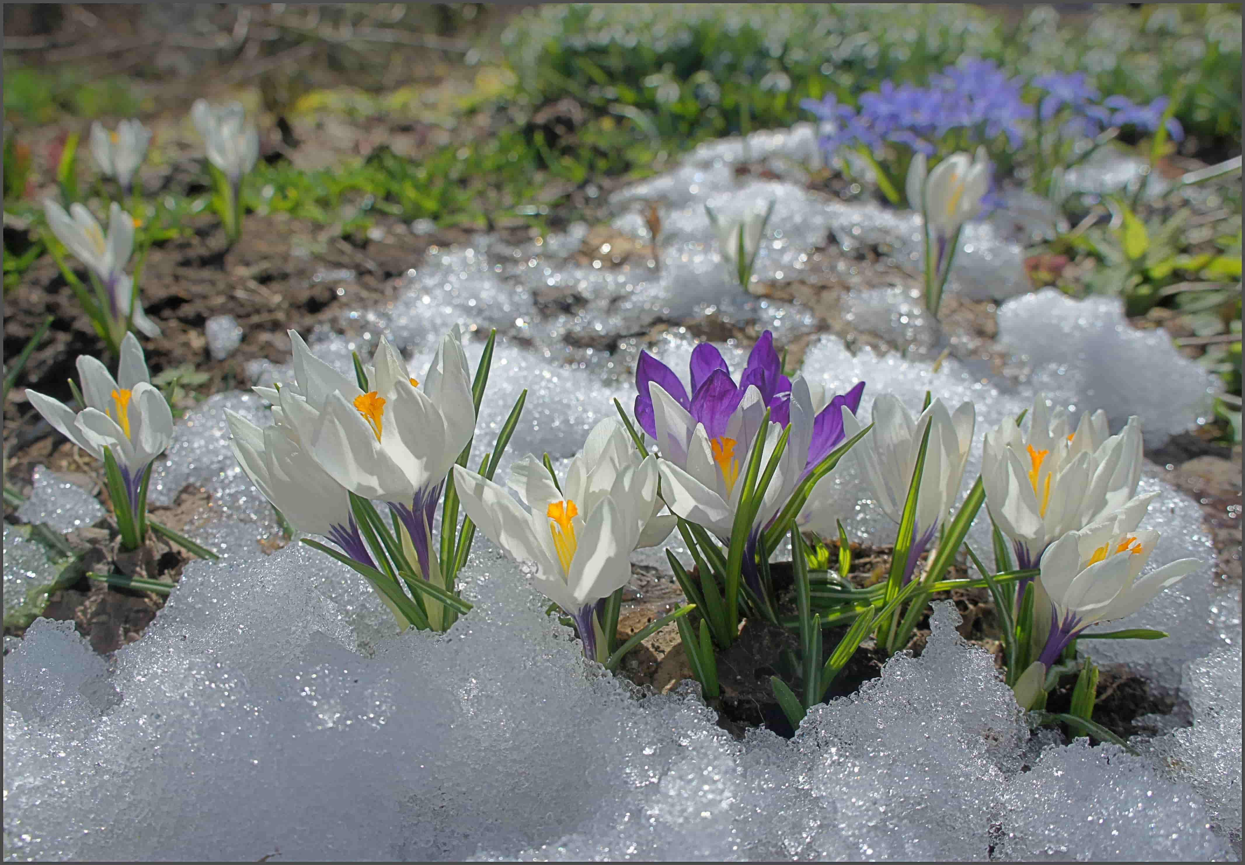 картинки весна приход весны