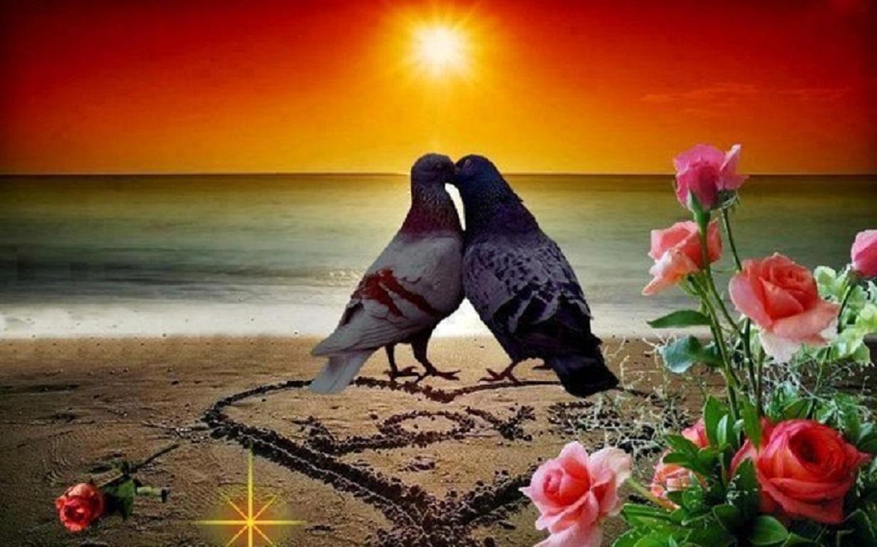 Картинки с голубями и сердцами доброе утро