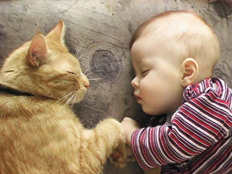 Смешная картинка про животных и детей