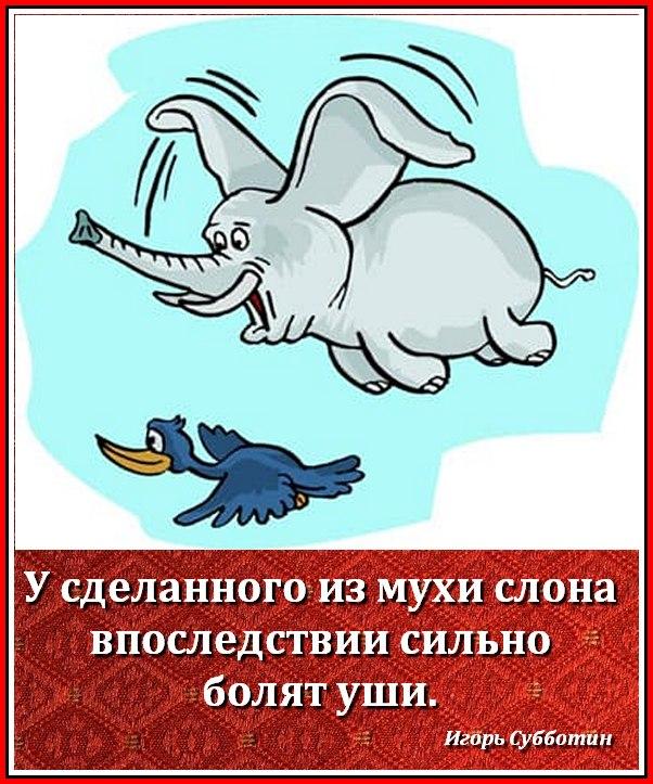 Картинка с мухой я слон