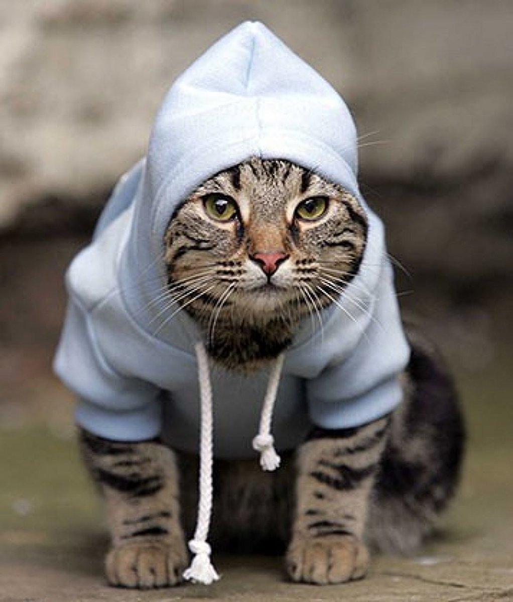 фотки котиков на аву в скайпе для пацанов выполнял свою основную