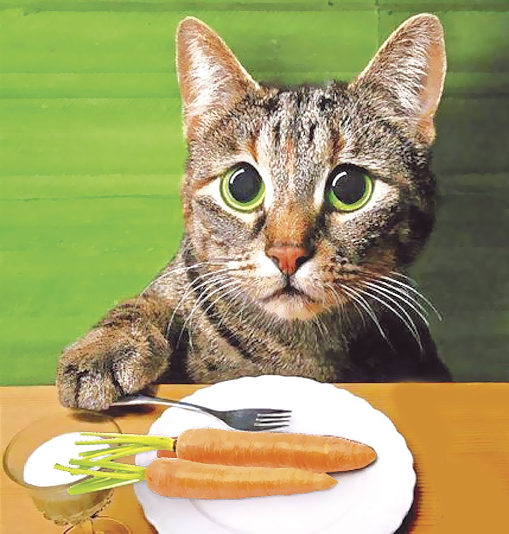 Кот мало есть и похудел
