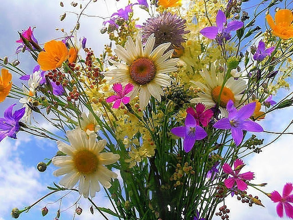 С днем рождения картинки красивые полевые цветы, корова рисунок добавить