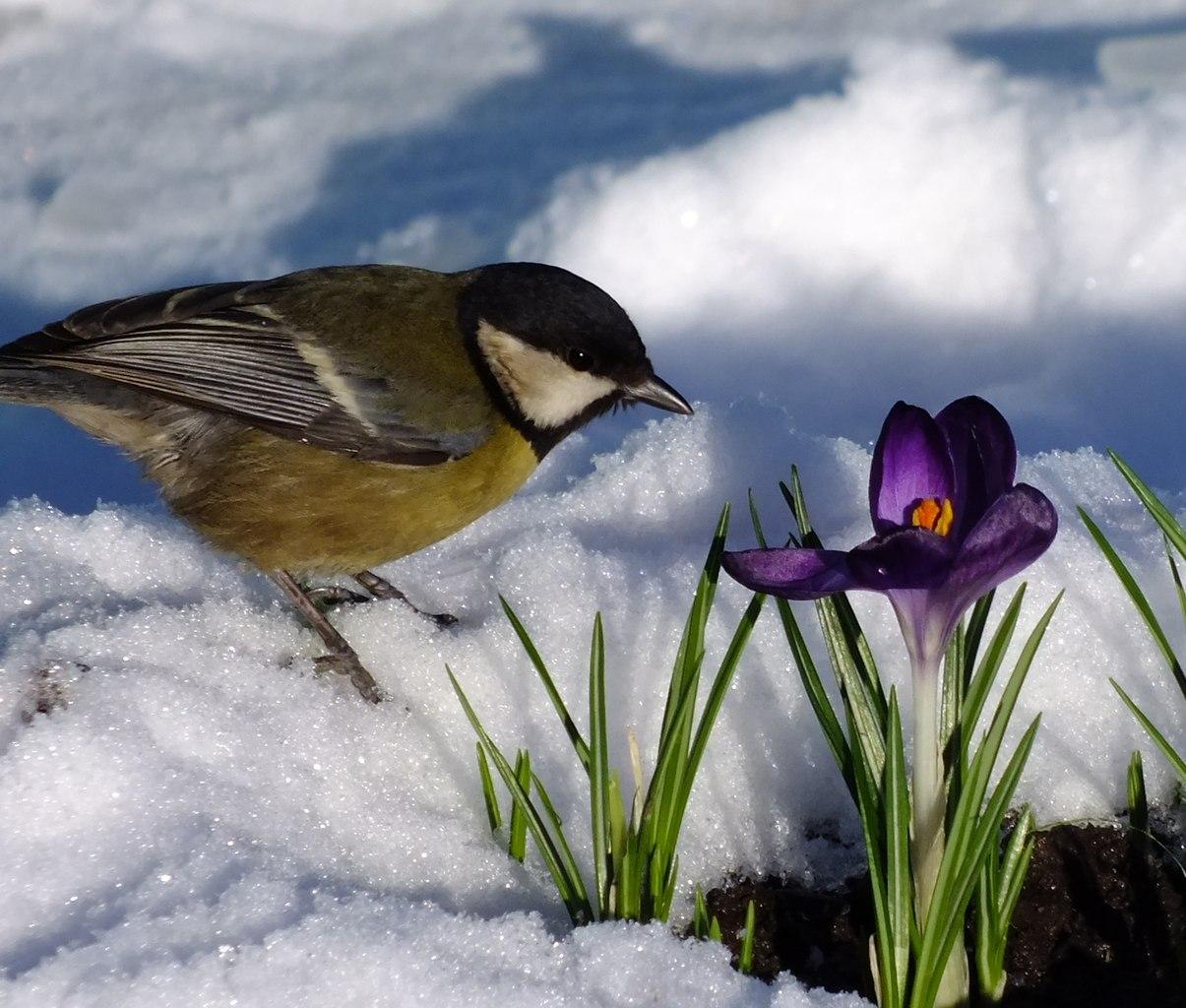 Картинки весны с ручейком птицами и цветами