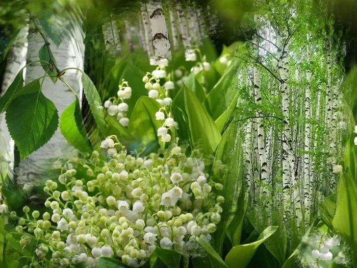 Ландыши картинки красивые в лесу
