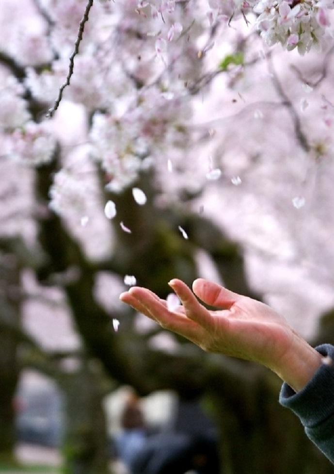 фото с цветущими деревьями руками этот период