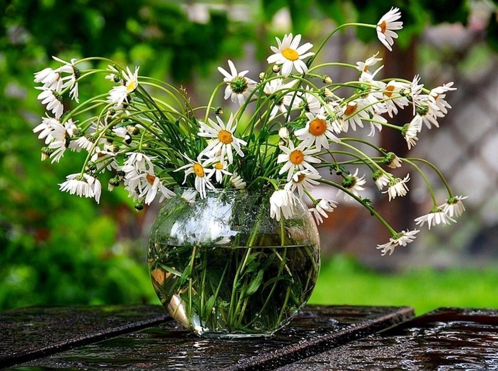 Доброе утро фото красивые природа с надписью