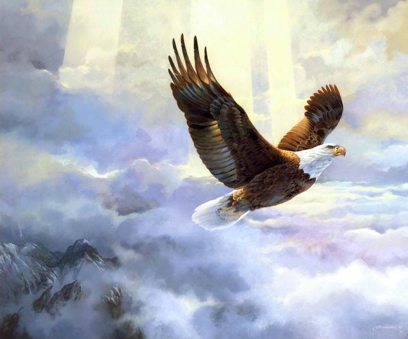 картины и фото орла в полете есть люди, которые
