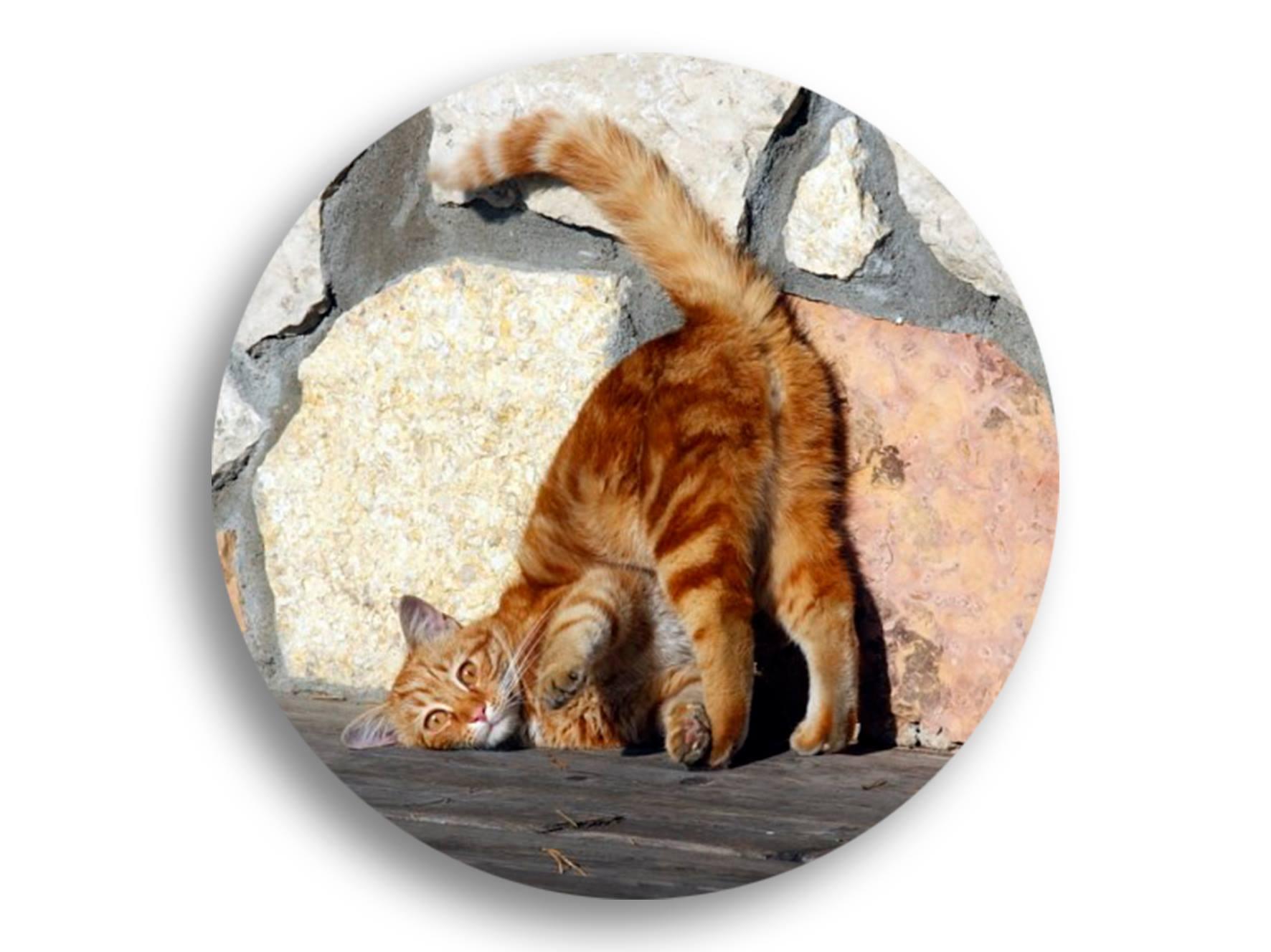Коту под хвост смешные картинки