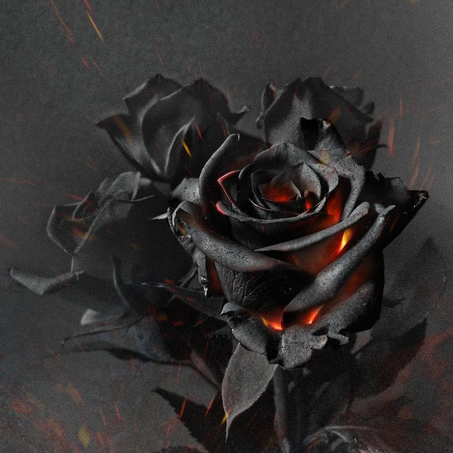 сайте пепел розы картинки приложении очень удобный