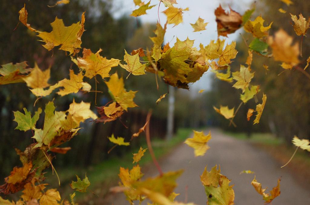 ролик картинка улетающие листья только