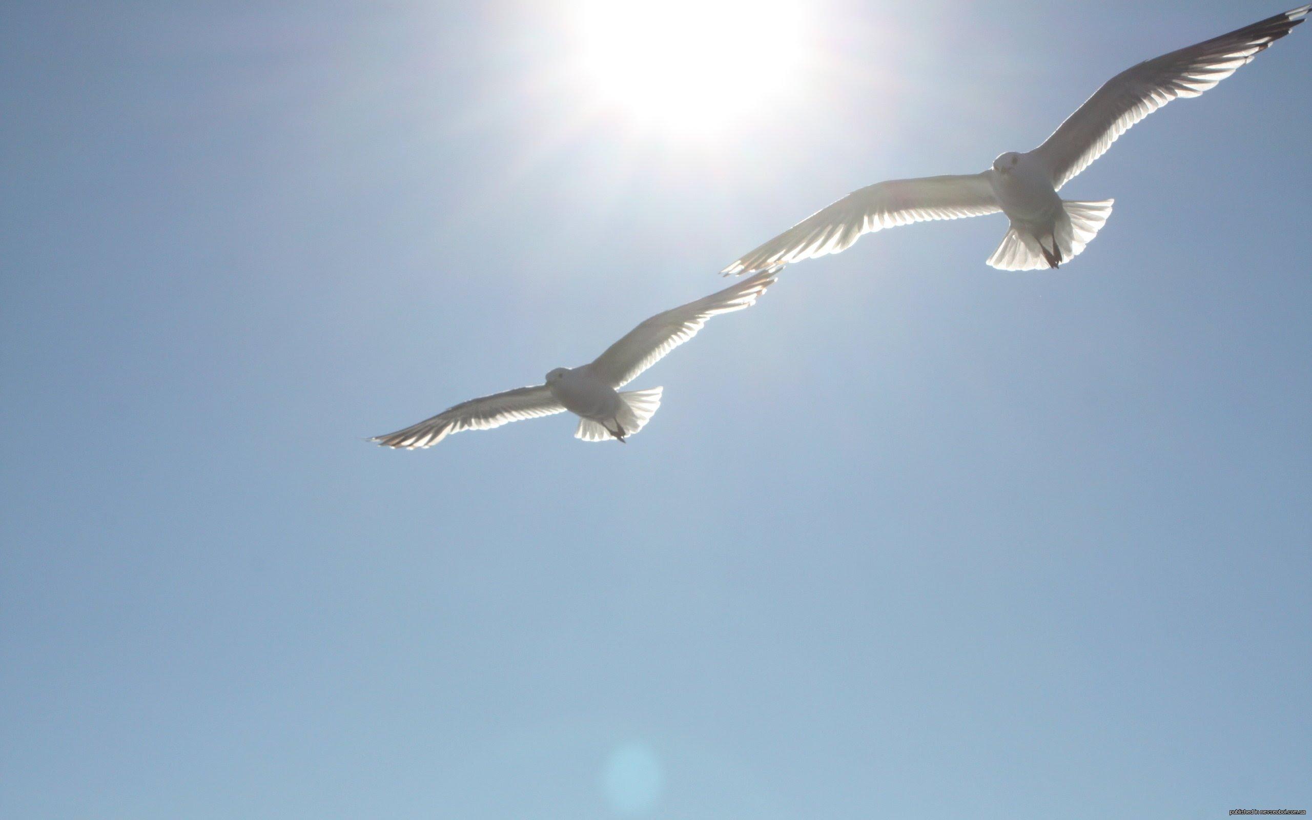 Две птицы в небе картинки