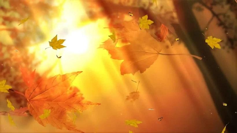 Картинки анимации осенние листья