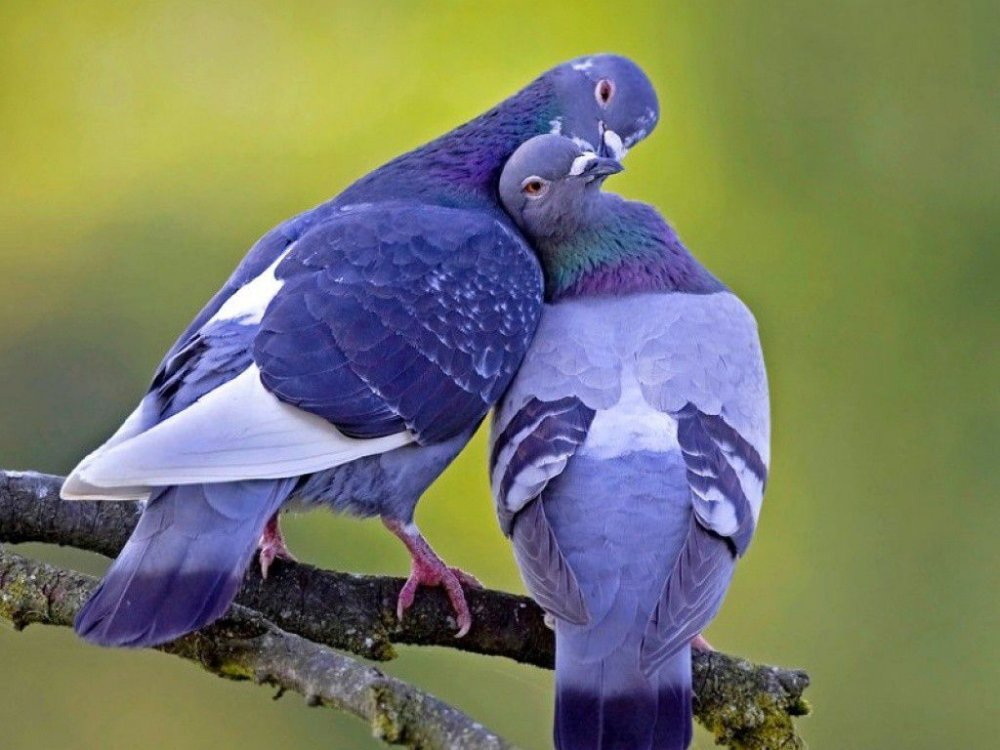 этническом стиле голубь обнимает картинки пользователи после