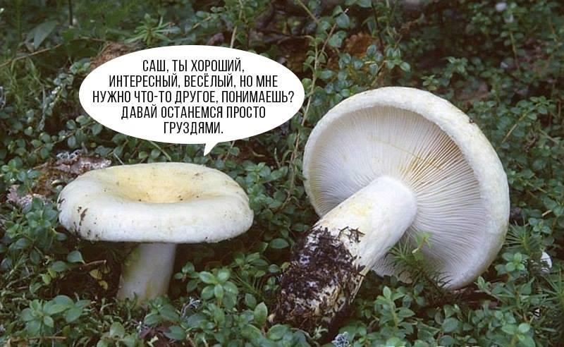 https://www.stihi.ru/pics/2018/10/26/911.jpg?6730