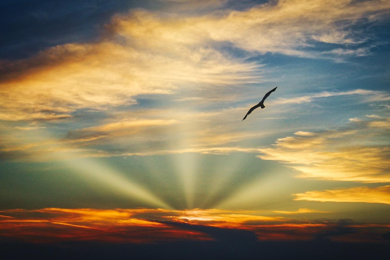 полет птиц картинки позволяет быстро