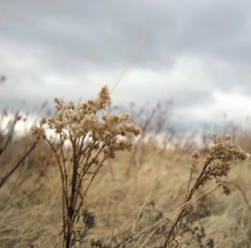 Трын-трава... ((Людмила Кочегарова стихи - 8442