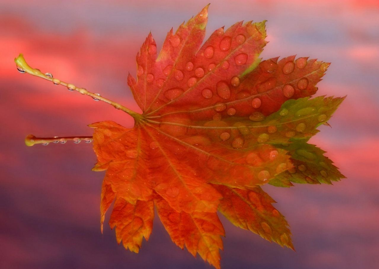 Днем, открытки листья